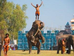 Шествие слонов