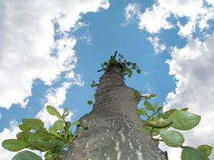 Мировое Дерево: гороскоп майя