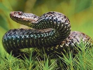 Змей: гороскоп майя
