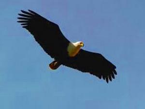 Орёл: гороскоп майя