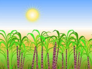 Mesha Sankranti (Solar New Year)