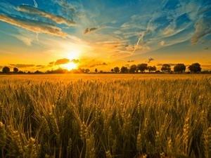 Лита — день летнего солнцестояния