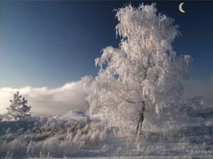 Емельян зимний