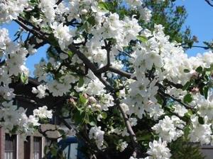 Евтихий Тихий да Ерема Пролетный