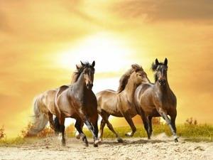 Фрол и Лавр — лошадники