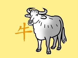 Ox: chinese (eastern) horoscope