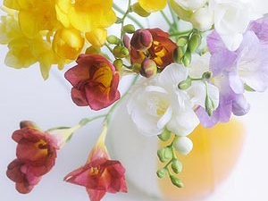 Freesia: flower horoscope
