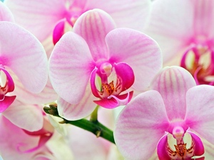 Orchid: flower horoscope