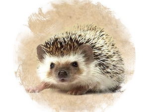 Hedgehog: zoroastrian horoscope