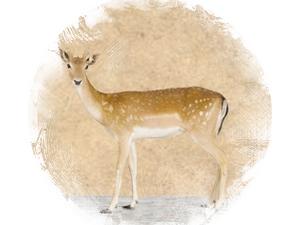 Fallow Deer: zoroastrian horoscope