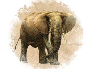 Слон: зороастрийский гороскоп