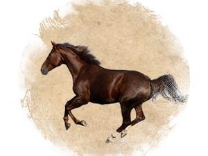 Конь: зороастрийский гороскоп
