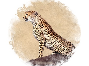 Cheetah: zoroastrian horoscope