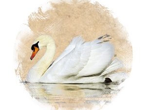 Swan: zoroastrian horoscope