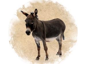 Donkey: zoroastrian horoscope