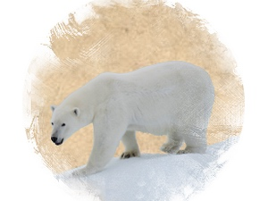 Polar Bear: zoroastrian horoscope