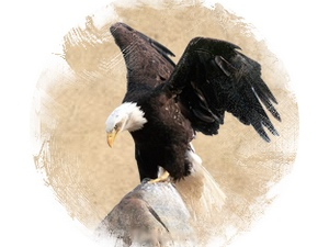 Eagle: zoroastrian horoscope