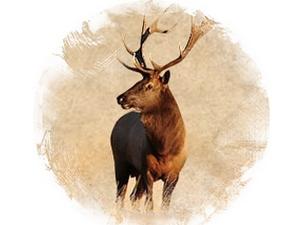 Deer: zoroastrian horoscope