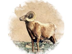 Баран: зороастрийский гороскоп