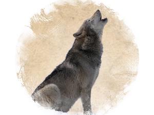 Волк: зороастрийский гороскоп