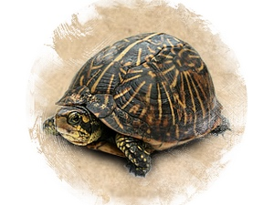 Turtle: zoroastrian horoscope