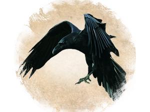 Ворон: зороастрийский гороскоп