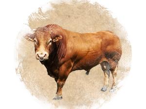 Bull: zoroastrian horoscope